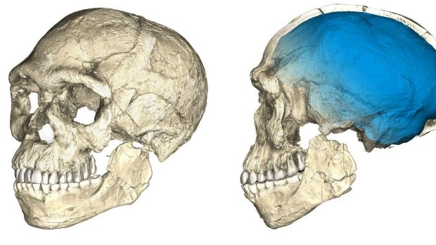 Homo Sapiens Emerged 100,000 Years Earlier Than Previously Thought